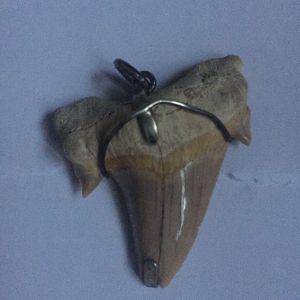 Δόντι Καρχαρία μενταγιον