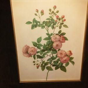 Κορνιζες με φωτογραφιες λουλουδιων